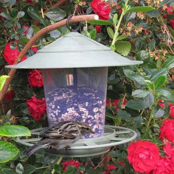 Eco Beacon Bird Feeder with 275g Bird Food