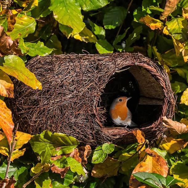 Simon King Brushwood Robin Nest